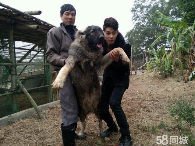 还用中最大的动物