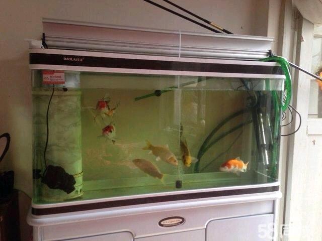 【图】出售上滤鱼缸送过滤桶-鱼缸的过滤系统