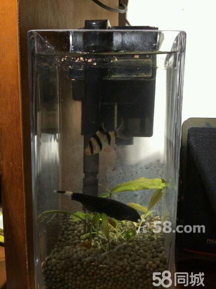 鱼缸氧气泵安装图分享展示