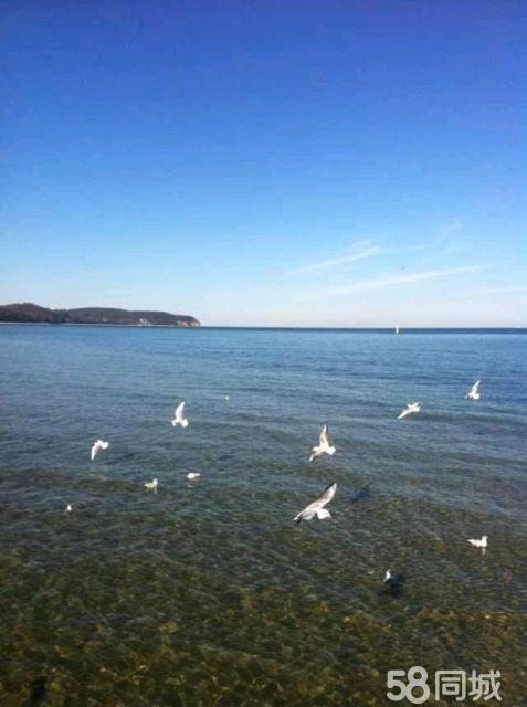图罗地海天然琥珀蜜蜡批