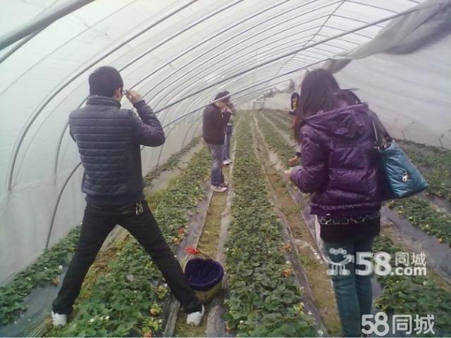 姚奎奎/采摘西瓜、香瓜、草莓,好吃、好玩、实惠又新鲜