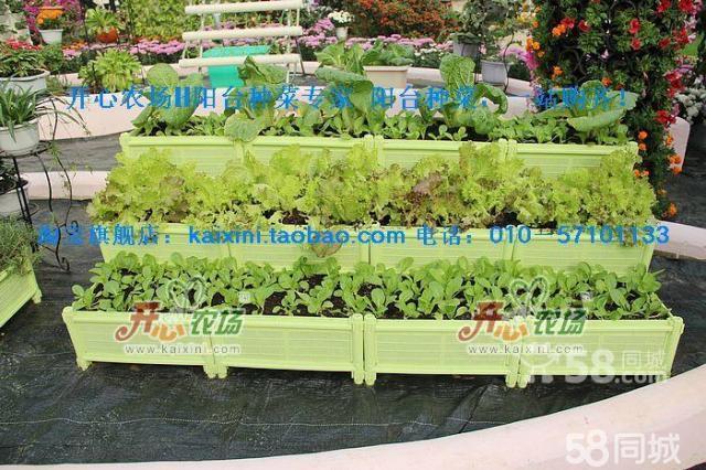 开心农场(http://www.kaixini.com)是专业从事阳台种菜、家庭园艺系列产品及办公室桌面绿化系统的电子商务企业。产品具有低碳环保、简易便利、美化、绿化、净化居室等优点。以倡导绿色低碳生活方式,创造美好城市生活为宗旨,公司致力于将现代生物种植技术浓缩到城市家庭阳台、露台、楼顶、室内和庭院等闲置空间进行有机蔬菜、瓜果等的种植。我们的目标是:让每个家庭都轻松拥有一个简约、环保、生机勃勃的绿色菜园、精致花园、让每个办公室有个小生态绿化。 阳台温室您的阳台种菜空间魔术师 种 植 箱积木般创造您