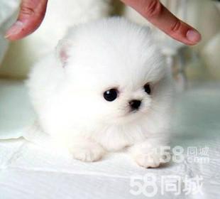 长不大,长不大的狗50元以下,永远长不大的狗,长不大 ...