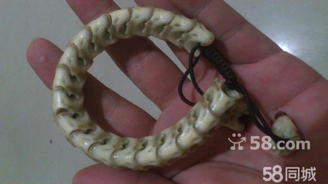 北京动物园蛇骨