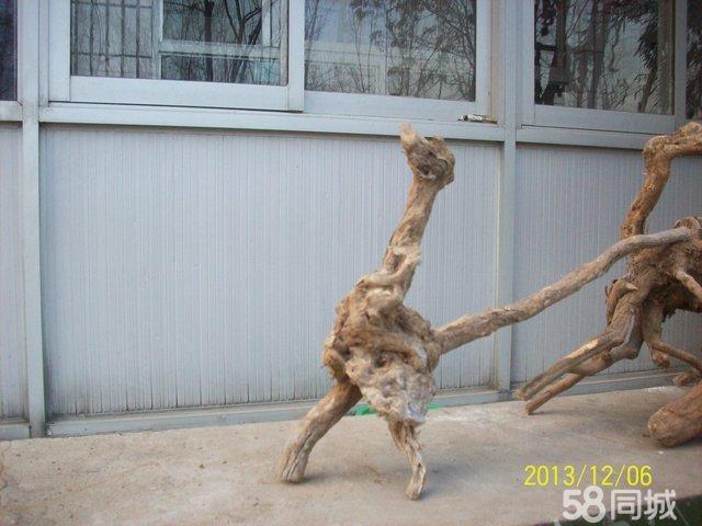 天然荆疙瘩根雕 六道木 麻梨疙瘩 麻核桃-酸枣根雕图片,酸枣木拐杖