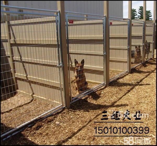 【图】顶级赛系德牧幼犬 乌索斯直子 警犬训练