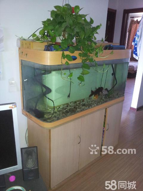2 0.6 0.4(米)鱼缸带木质地三门柜子有两条锦鲤一条黑鲤鱼