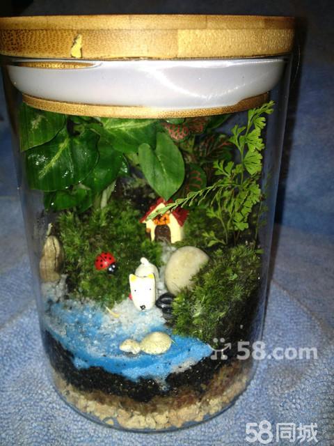 【图】苔藓微缩景观 创意手工制作礼品