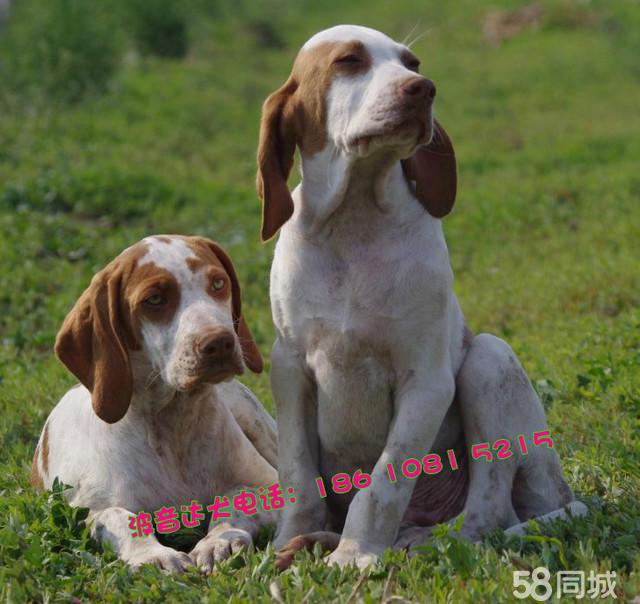 求各种可爱狗狗图片加狗狗名称和品种