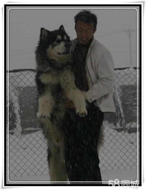 史上体形最大的动物