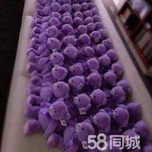 澳大利亚紫色的树
