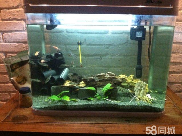 浮石鱼缸造景展示