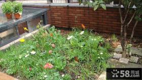 室外阳台花卉图片大全