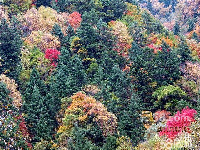 卡龙红叶风景区