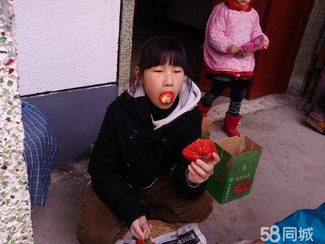 青浦白鹤草莓节阿毛草莓农庄