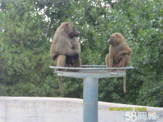 威海赤山 西霞口野生动物园纯玩两日游c - 青岛58同城