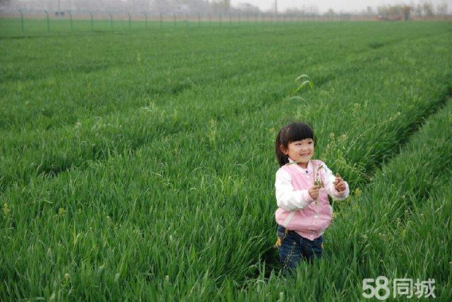 农场西西_
